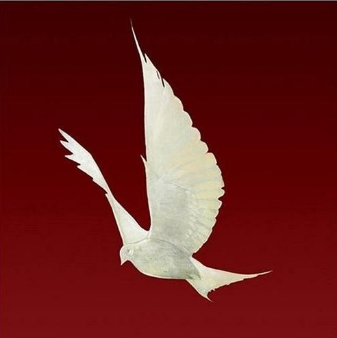 Floor - Dove - 2004
