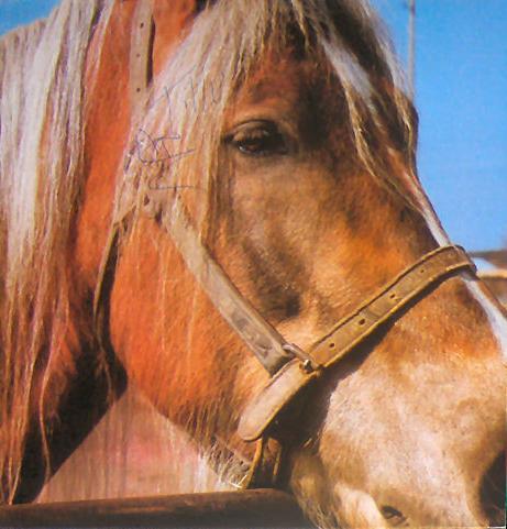 Terveet Kädet - The Horse 1985